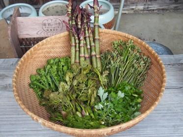 山菜,種類