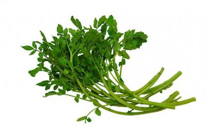 クレソン,山菜