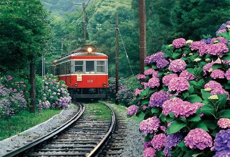 あじさい,箱根登山鉄道